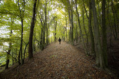 Man walking on a forest roar trough trees in summer Stock Photography