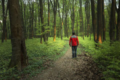 Man walking in the forest Royalty Free Stock Image