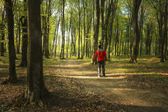 Man walking in the forest Stock Photos