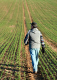 Man walking through a green field in England Royalty Free Stock Images
