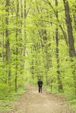 Man walking in the green forest Royalty Free Stock Photos
