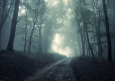 Man walking in a green forest with fog stock image