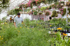 Man walking through the greenhouse Stock Photo