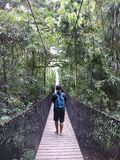 Man Walking on Hanging Bridge in Forest Stock Photography