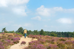Man walking in heather fields Stock Photography