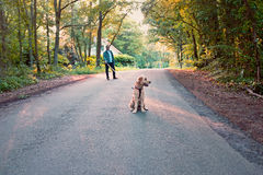 Man walking with his dog in the forest from the Netherlands Royalty Free Stock Photography