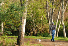 Older Man Enjoying a Afternoon Stroll. Mature man walking his little dog on a country road surrounded by big leafy trees wearing a ball cap jeans gray shirt and Royalty Free Stock Images