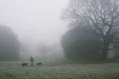 Man walking his dogs in a fog Royalty Free Stock Photos