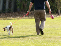 Man walking his pet dog Royalty Free Stock Images