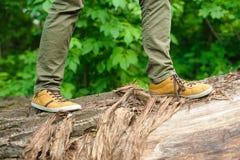 Man walking on a log Royalty Free Stock Image