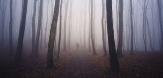 Man walking in mysterious forest with fog Royalty Free Stock Image