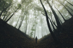 Man walking in mysterious forest with fog Royalty Free Stock Photos