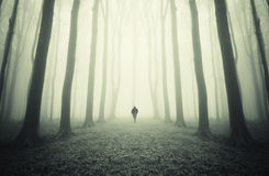 Man walking in a mysterious symmetrical forest with fog Royalty Free Stock Image