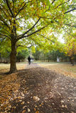 Man walking in a national park in autumn Royalty Free Stock Image