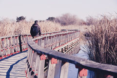 Man walking over a wood bridge in the nature, with a backpack. Stock Photography