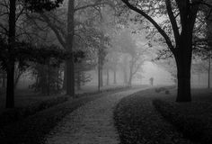 Man walking in park on beautiful misty autumn morning Stock Images
