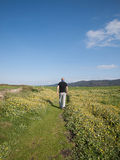 Man walking in a path in the middle of meadow Royalty Free Stock Photos