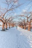 A man walking on path in snow stock image