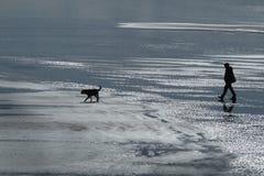 Man walking pet dog on wet beach. Stock Photo