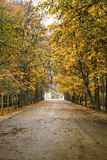 Man walking in the rain. In the park one autumn day Stock Photo