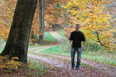 Man walking in Ravnsholt forest Stock Photography