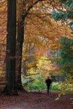 Man walking in Ravnsholt forest Stock Photos