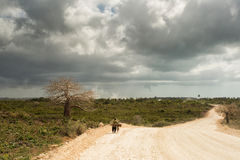 Man walking on road in Zanzibar with baobab tree in background Stock Image