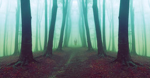Man walking in scary forest with fog. Royalty Free Stock Photography