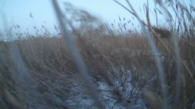 Man walking in the snow and dry high grass stock footage