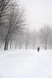 Man walking in a snowy park. During a snowfall Royalty Free Stock Photo