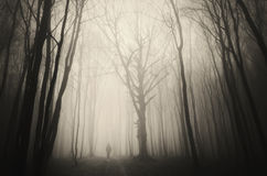 Man walking in spooky forest with fog on Halloween. Creepy man walking in spooky forest with fog on Halloween royalty free stock photography