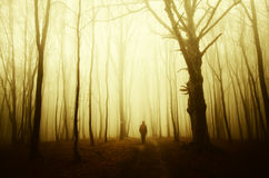 Man walking in spooky forest Royalty Free Stock Photos