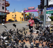 A man walking on street with many pigeons in Melaka, Malaysia Royalty Free Stock Photo