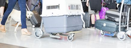 Free Man Walking Suitcase Luggage Bag And Dog Box On Trolley In The Airport. Stock Photo - 130052810