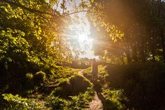 Man walking on sunlit path through small woods in spring royalty free stock images