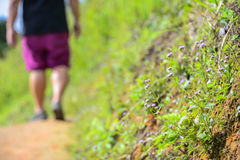 A man walking to the hill. Defocus Stock Photography