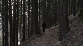 Man walking on a trail in the forest stock video footage