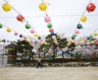 Man walking under traditional colourful paper lanterns Royalty Free Stock Photos