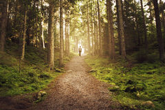 Man walking up path towards the light in magic forest. A man walking a path up a hill in an enchanted forest. Walking towards the golden light Royalty Free Stock Photos