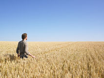 Man Walking in Wheat Field Stock Photos