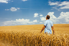 Man walking through wheat field Stock Photo