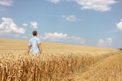 Man walking through wheat field Stock Image
