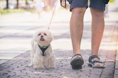 Free Man Walking With Dog Stock Images - 101103064