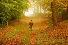 Man walking through woodland Royalty Free Stock Images