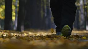 Man walking with yorkshire terrier . Dog standing with leash on autumnal path stock photo