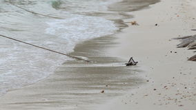 Man walks alone on beach stock footage
