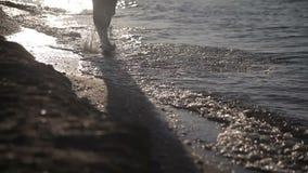 A man walks along the seashore stock video