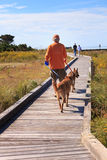 Man Walks Dogs Outdoor Recreation North Carolina NC Stock Image
