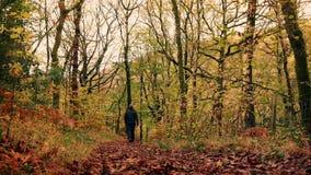 Man Walks Down Path In Woods