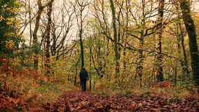 Man Walks Down Path In Woods stock video footage